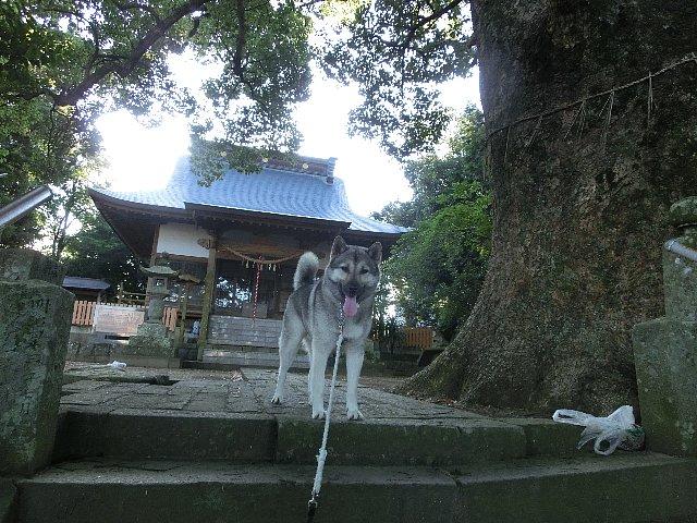 裏山の神社
