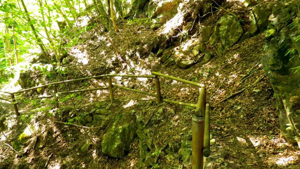 野鳥の森歩道1