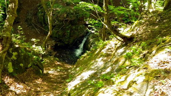 野鳥の森歩道2