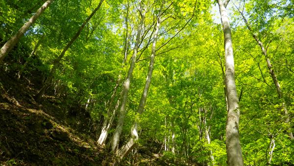 野鳥の森歩道3