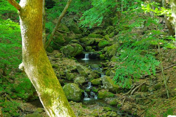 野鳥の森歩道4