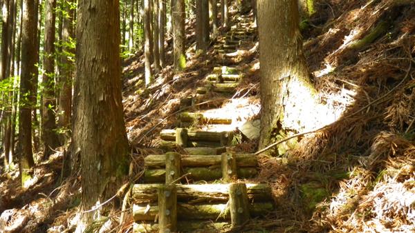 野鳥の森歩道6