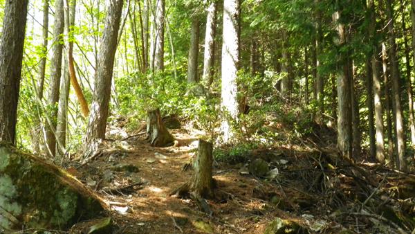 野鳥の森歩道7