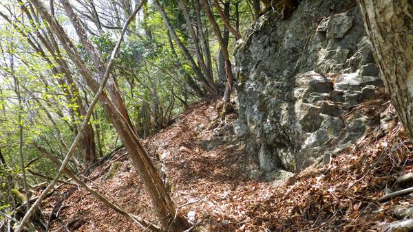 野鳥の森歩道9