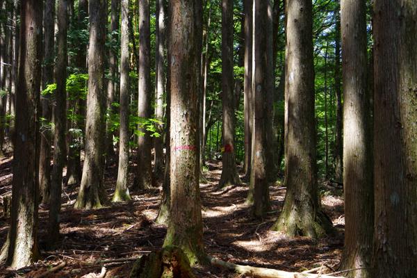 栗の木の段