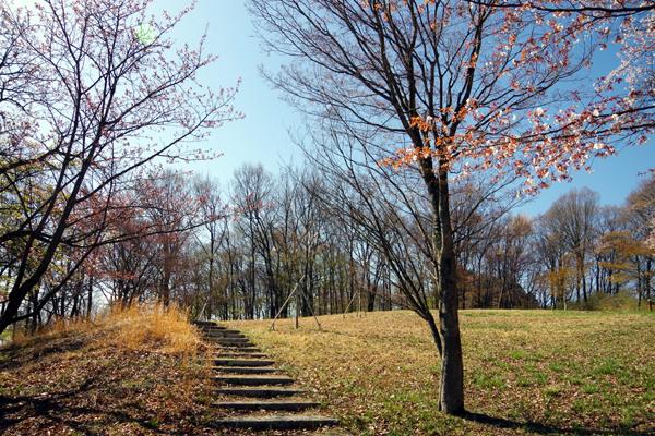 美の山公園1