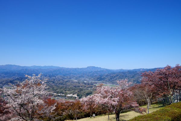 美の山公園3