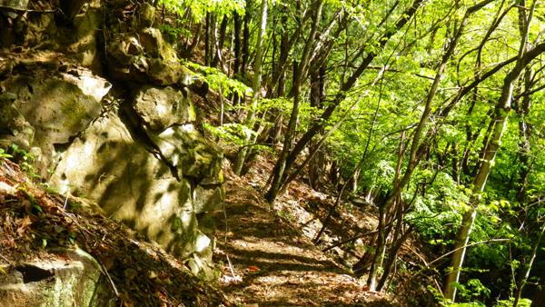 体験の森1
