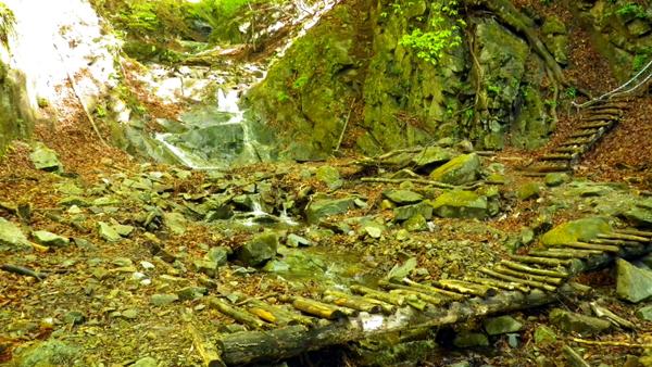 体験の森2