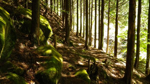 体験の森4
