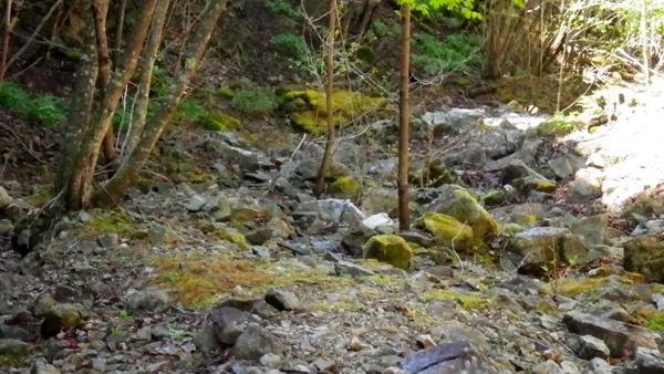 体験の森5