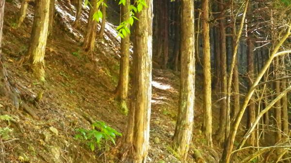体験の森6