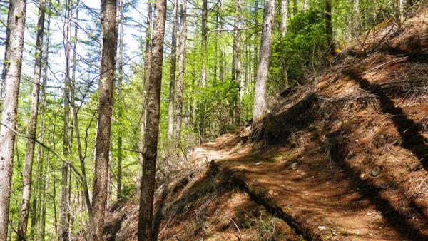 体験の森7