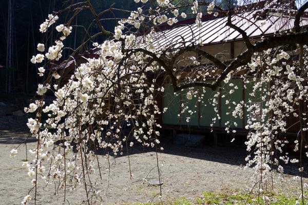 梅園神社03
