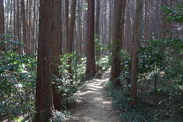 大高取山03