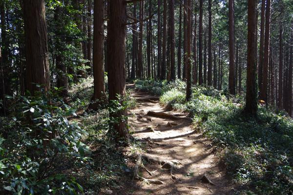 大高取山05