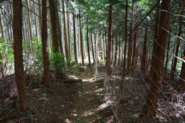 武川岳30
