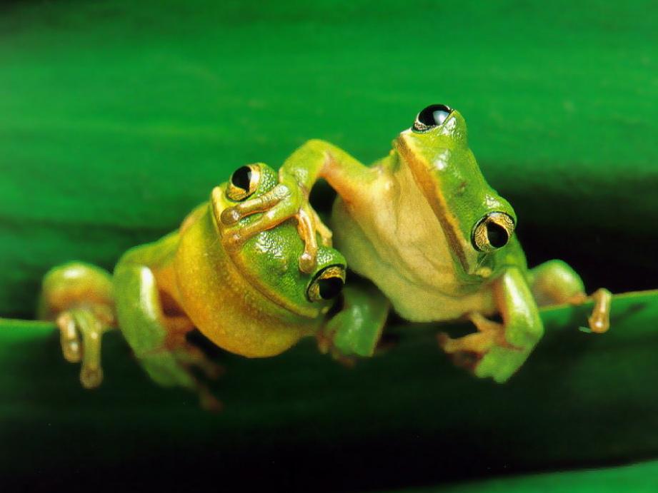 frog153-2