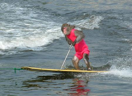 monkey_waterski.jpg