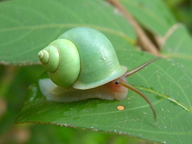 snail-16.jpeg