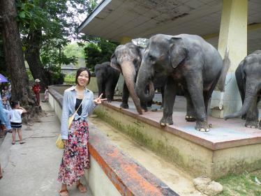 ヤンゴンの動物園のゾウ