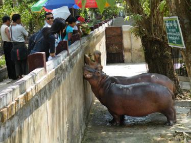 ヤンゴンの動物園のカバ