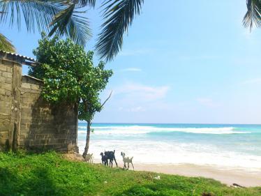 スリランカの海5