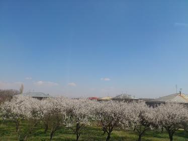 アルメニア国境後の道3