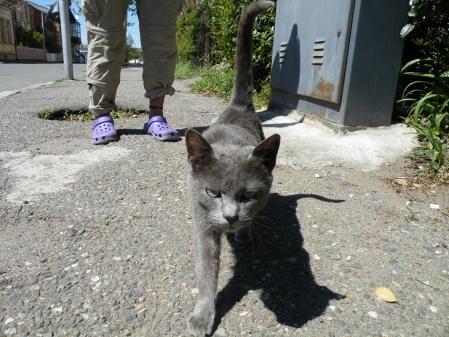 クタイシの猫2