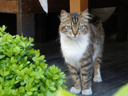 葉っぱと猫