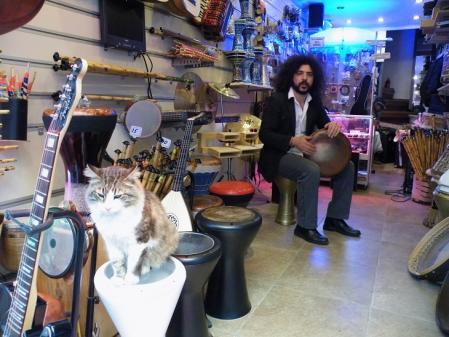 楽器屋の猫