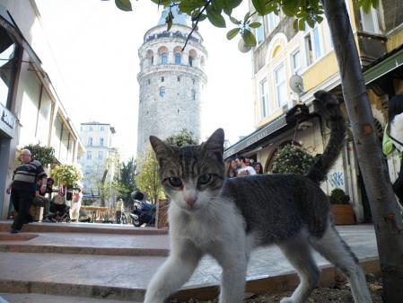ガラタ塔と猫
