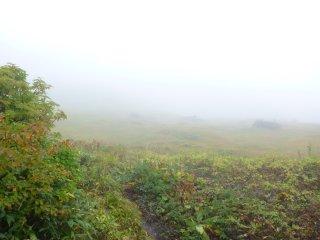 s03御室下の湿原