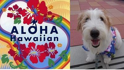 Aloha Hawaip