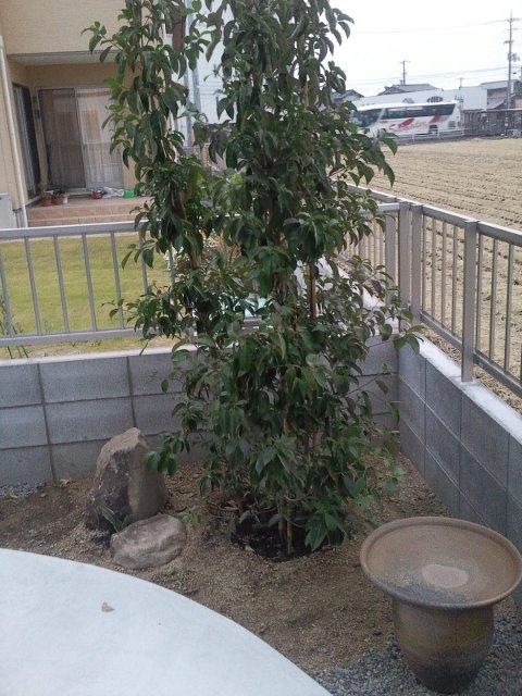 外構 樹木