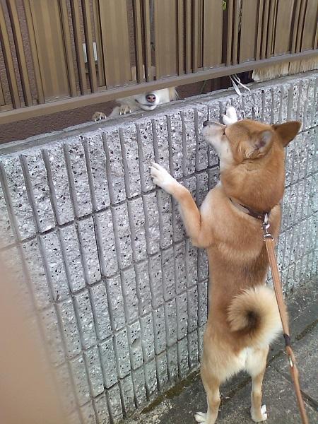 ゴンちゃん塀の向こうのお友達