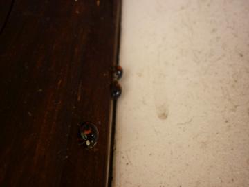 てんとう虫の日