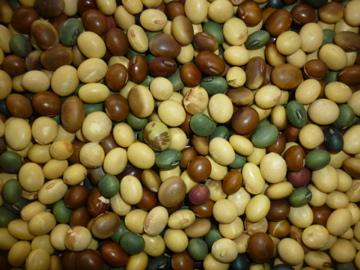 いろいろ大豆