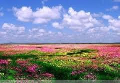 中国の草原images