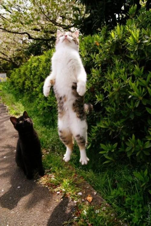 ネコさんの昇天9