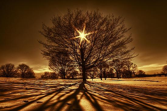 世の光image
