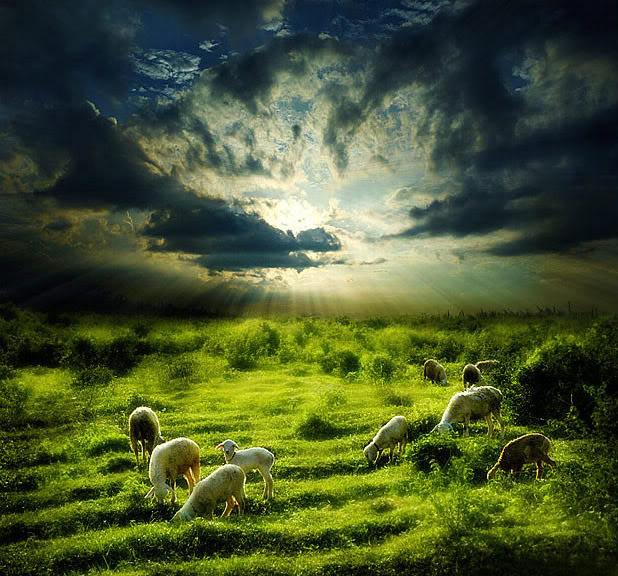 イエズスの羊naturelight04
