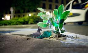 たくましい植物images