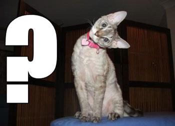 はてなねこquestioncat