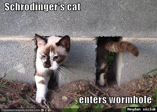 シュレディンガーの猫image