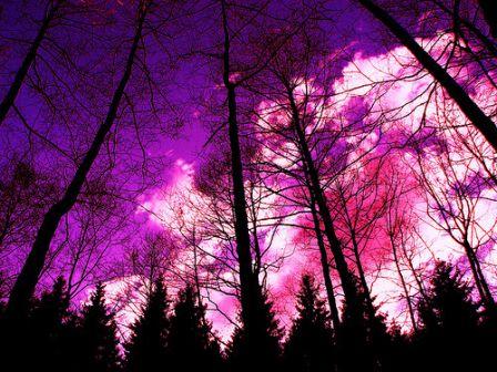 紫色の空image