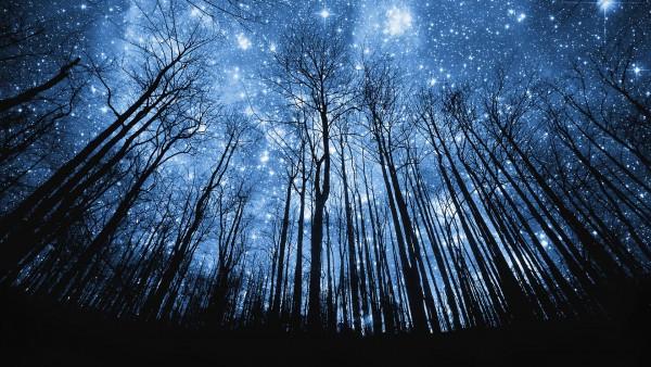 木々の上の星々image