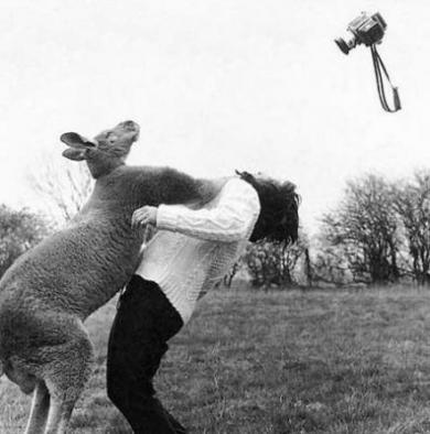 カンガルーに殴られてimage