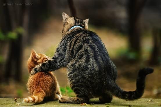 お母さんと子猫のimage