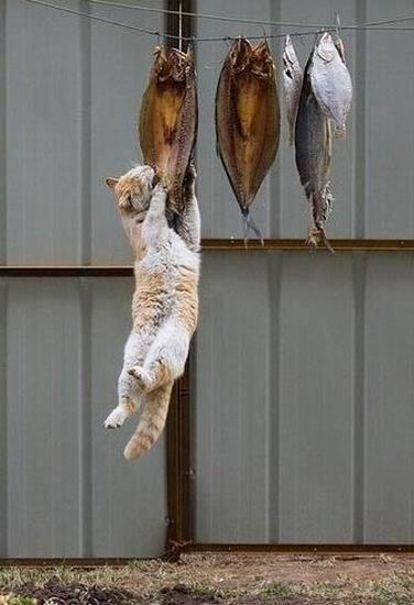 生きていくにはこのくらい的な猫image